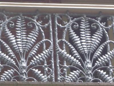 Iron-Lace - Australian fern, 35 Arcadia Rd